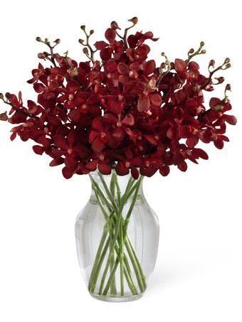 Calgary Exotic Flower Shop 36